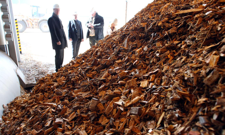 Будем жечь древесину! Эстония придумала новый способ производства электроэнергии