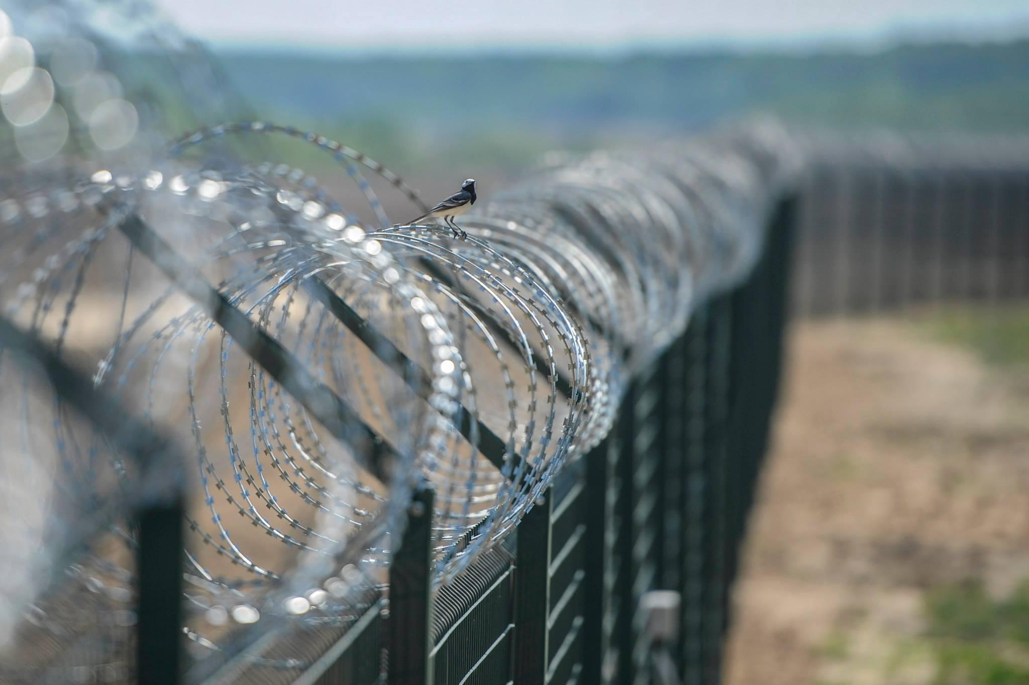 В Литве решили построить новую стену на границе с Беларусью