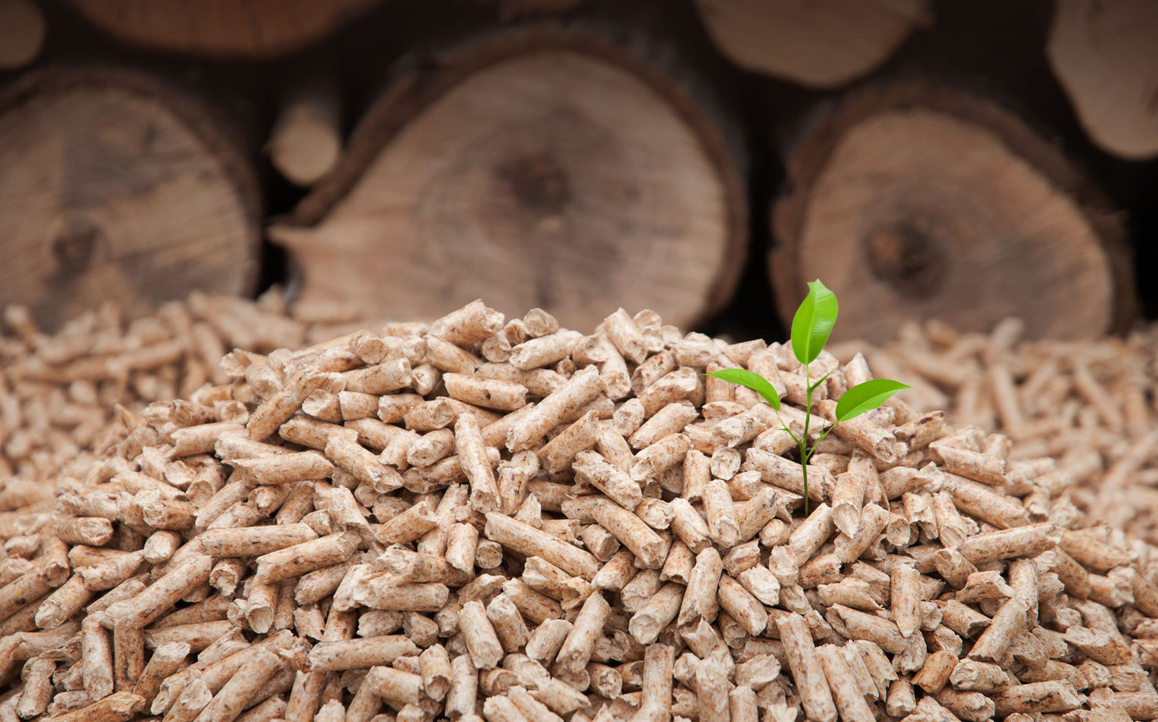 Цены на газ заставили Польшу и литву скупать древесное топливо в Беларуси